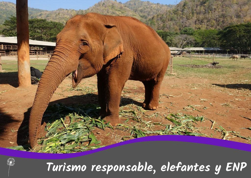 Turismo responsable, elefantes y Elephant Nature Park. Información sobre refugios de elefantes en Tailandia y el Sudeste Asiático, sobre si es moral o ético o no.
